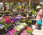 Scarborough Garden Center, Nursery, Patio Shop and Gifts